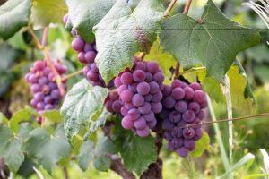 5 must-visit Australian wine regions | The Meat & Wine Co